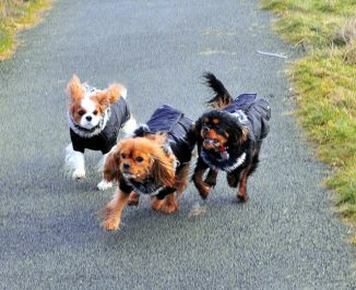 Cavaliers in Cold Weather Jackets