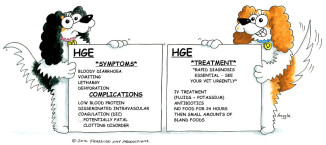 Dog Hemorrhagic Gastroenteritis Home Treatment