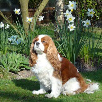 Maisy Cavalier Photophobia