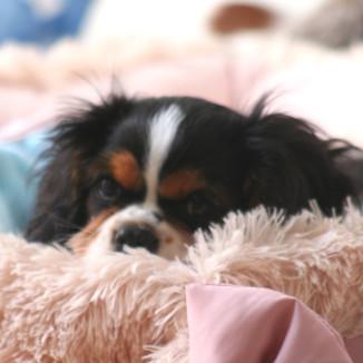 Molly Pup