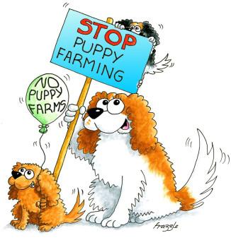 No Puppy Farms
