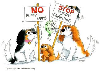 Stop Puppy Farming
