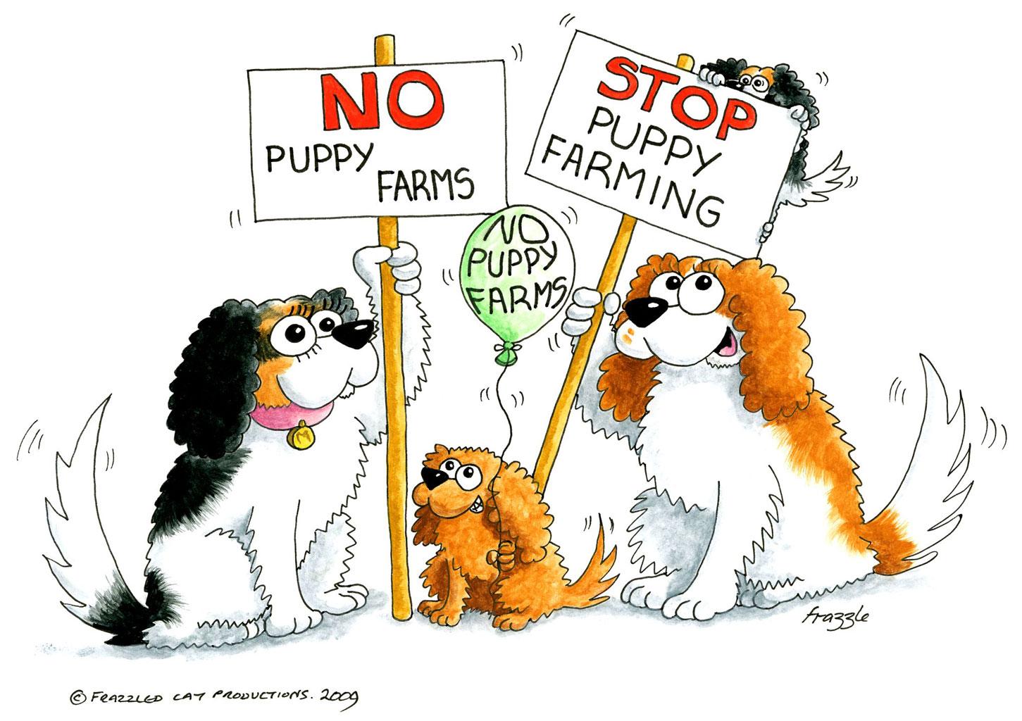 battery farmed puppies cavalier matters